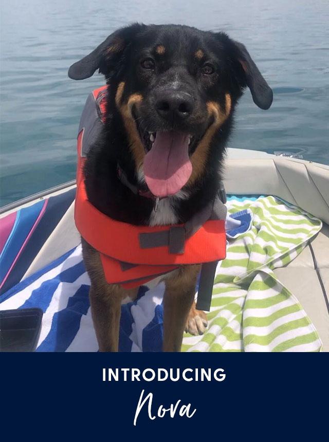 Introducing Nora. A black and tan dog.