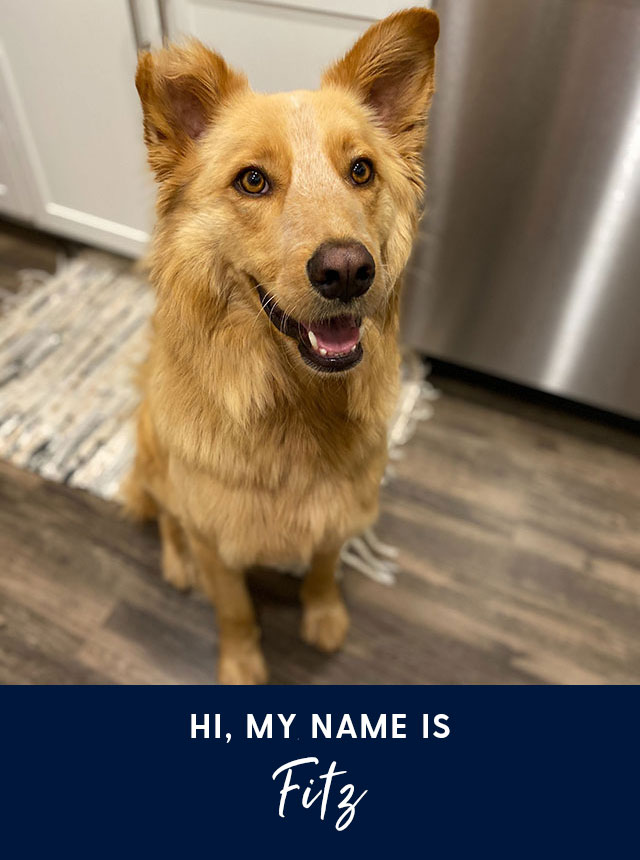 Hi, my name is Fitz. A mixed dog rescue